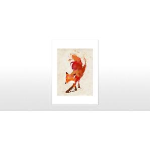 Vulpes Vulpes von Robert Farkas, 42 x 59cm (A2) Gerahmte Kunstdrucke