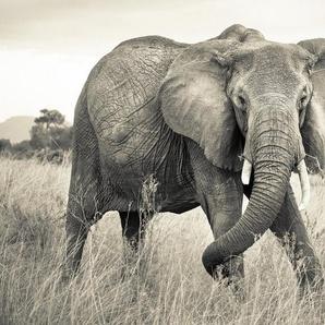 KOMAR Fototapete »Elephant«, 4-teilig