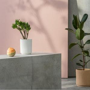 2 x Palm Blumentoepfe, Sand und Weiss
