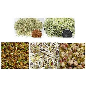 500 g BIO Keimsprossen Mischung -Asia MIX- Keimsaat 5 x 100 g Samen für die Sprossenanzucht Bockshornklee, Alfalfa, Mungobohnen, Senf, chin. Porree Sprossen Microgreen Mikrogrün