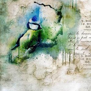 CONSALNET Vliestapete »VOGEL VINTAGE«, 312 x 219 cm