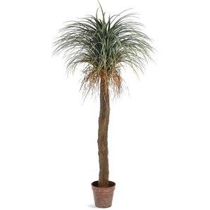 Kunstpflanze Palme, H:183cm, grün