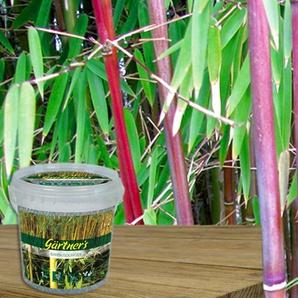 Bambus: 6/ mit 1 kg Bambus-Dünger