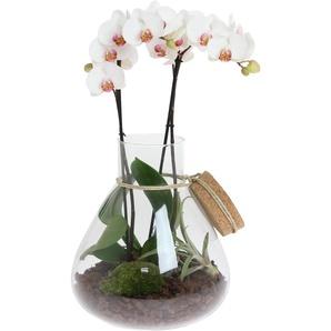 Orchideen-Arrangement 1 weiße Orchidee im Glas mit Deko-Korken