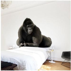 Bilderwelten Vliestapete Quadrat »Gorilla I«