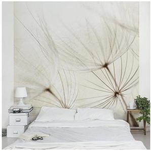 Bilderwelten Vliestapete Blumen Quadrat »Sanfte Gräser«