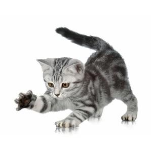 Fototapete »Katze«, mehrfarbig, 3D-Optik, FSC®