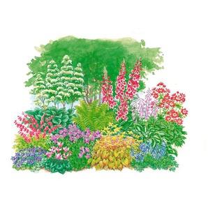Pflanzenset »Schattenpflanzen«, 11 Pflanzen