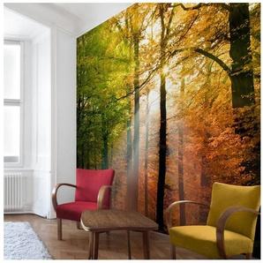 Bilderwelten Vliestapete Quadrat »Morning Light«