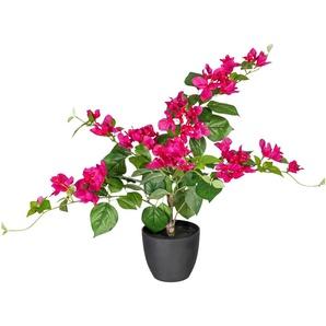 Künstliche Zimmerpflanze »Bougainvillea« x5, ca. 70 cm