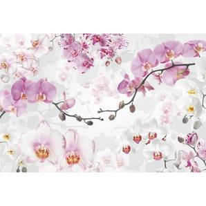 : Vliestapete, Rosa, Weiß, Pink, B/H/T 368 248 cm