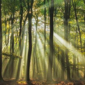 Sunny Start to the Day ........ - Piet Haaksma - Acrylglasbild