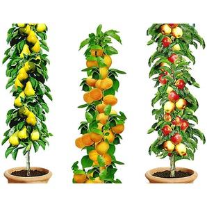 9er Säulenobst-Kollektion Aprikose, Apfel, Birne