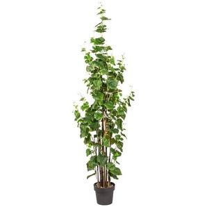Kunstpflanze »Weinlaub«, im Kunststofftopf, H: 180 cm