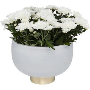 Vase Pure Weiß Bowl 17cm