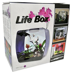 Lucky Reptile LB-30P Life Box 30 Nanoterrarium aus Acrylglas, beere