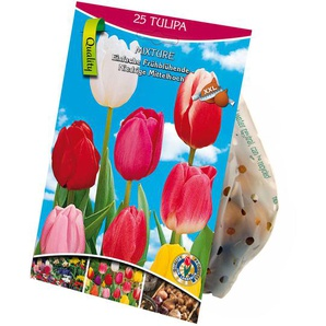 Einfache Tulpen Mischung 25 XXL-Zwiebeln