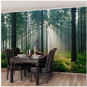 Bilderwelten Vliestapete - Enlightened Forest - Fototapete Breit »Enlightened Forest«
