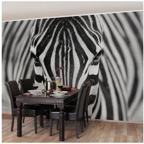 Bilderwelten Vliestapete Premium Quer »Zebra Look«
