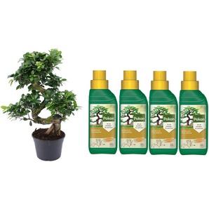 Baum: Bonsai-Baum + Dünger/ 2