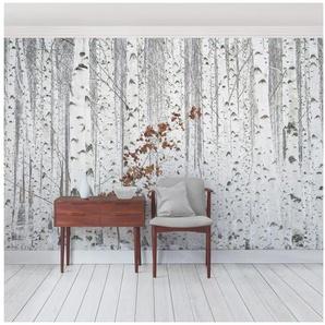 Bilderwelten Vliestapete Quer »Birken im Herbst«