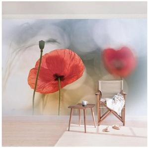 Bilderwelten Vliestapete Quer »Mohnblumen am Morgen«