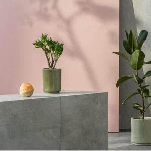 2 x Palm Blumentoepfe, Mintgruen und Gruen