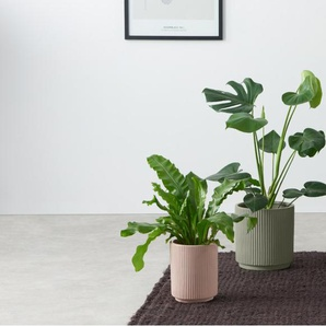 2 x Palm Uebertoepfe, Rosa und Grau