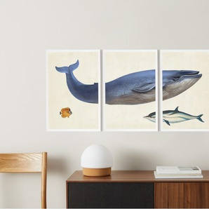 3 x Vintage Triptych Whale Illustration from the Natural History Museum, gerahmte Kunstdrucke (A3), Mehrfarbig und Weiss