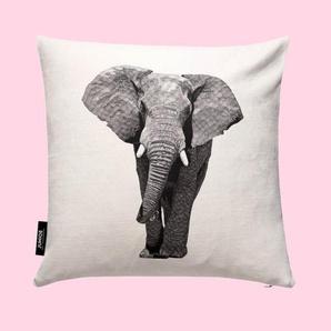 African Elephant- Kissen
