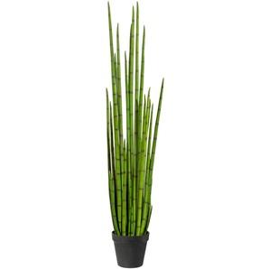 andas Künstliche Zimmerpflanze Taina B/H: 22 cm x 160 grün Zimmerpflanzen Kunstpflanzen Wohnaccessoires