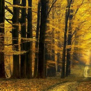Architects Paper Fototapete »Destiny Unknown«, (Set, 4 St), Herbst Wald, Vlies, glatt