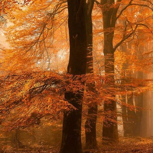 Architects Paper Fototapete »Fantastic Forest«, (Set, 5 St), Herbst Wald, Vlies, glatt