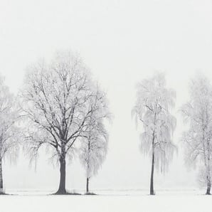 Architects Paper Fototapete »Frozen Five«, (Set, 4 St), Winter Wald, Vlies, glatt