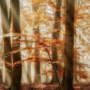 Architects Paper Fototapete »Rays of Grace«, (Set, 4 St), Herbst Wald, Vlies, glatt