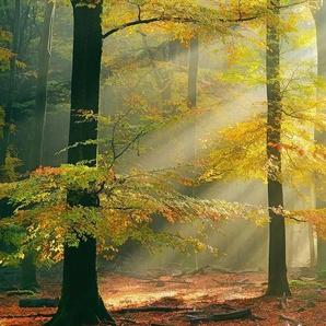 Architects Paper Fototapete »Sinfonia della foresta«, (Set, 5 St), Herbst Wald, Vlies, glatt
