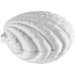 Aufbewahrungsdose  Muschel - weiß - Dolomite - 13 cm - 7,8 cm - 12,8 cm | Möbel Kraft