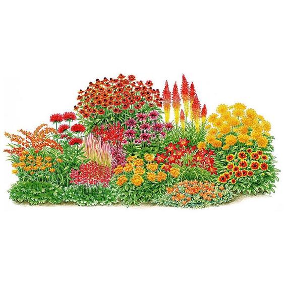 BCM Balkonpflanze »Sonnenfeuer« Set, 14 Pflanzen