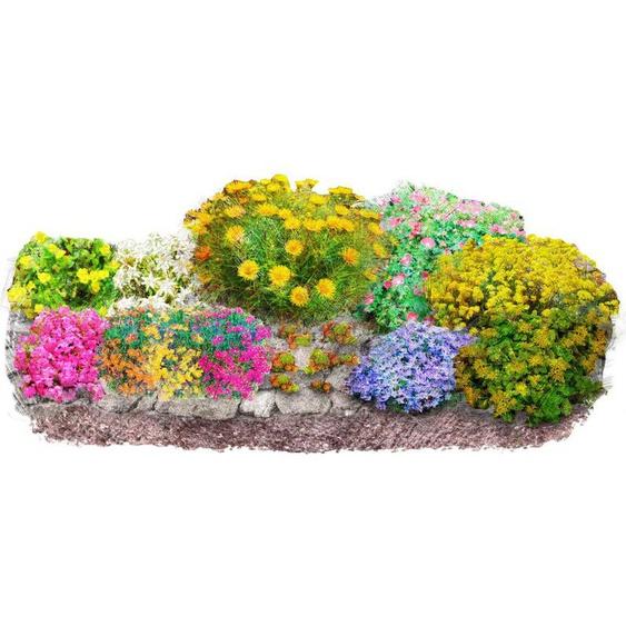 BCM Beetpflanze »Bunter Steingarten« Set, 12 Pflanzen