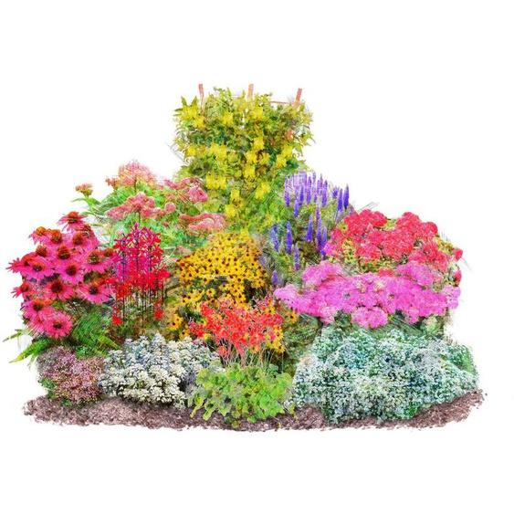BCM Beetpflanze »Vielfältiger Staudenreigen« Set, 12 Pflanzen