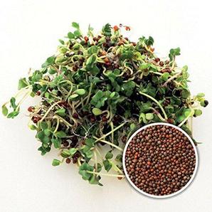 BIO Keimsaat Brokkoli Calabrese 1 kg Brokkolisamen zur Sprossenzucht Sprossen Microgreen Mikrogrün