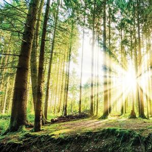 CONSALNET Fototapete »Sonniger Wald«, Vlies, in verschiedenen Größen