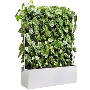 CP   Pflanzen-Trennwand weiß 120,0 x 163,5 cm