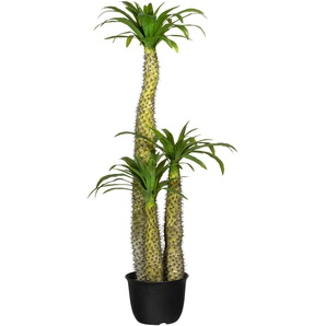 Creativ green Künstliche Zimmerpflanze Madagaskarpalme Pachypodium H: 170 cm grün Zimmerpflanzen Kunstpflanzen Wohnaccessoires