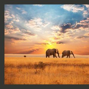 Fototapete Zwei Elefanten in der afrikanischen Savanne 270 cm x 350 cm