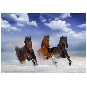 Glatte Fototapete Pferde im Schnee