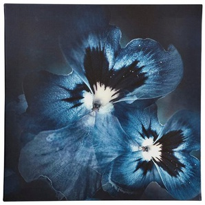 Guido Maria Kretschmer Home&Living Leinwandbild »Viola Flower«, gerahmt, Keilrahmen