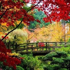 Home affaire Fototapete »Bridge in Japanese Garden«