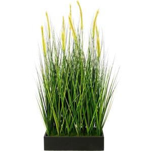 I.GE.A. Kunstpflanze Fuchsschwanzgras im Topf B/H: 50 cm x 120 grün Künstliche Zimmerpflanzen Kunstpflanzen Wohnaccessoires