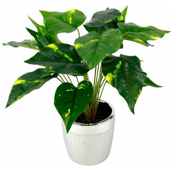 I.GE.A. Kunstpflanze Pothospflanze im Topf (1 Stück) 35x35x35 cm grün Zimmerpflanzen Pflanzen Garten Balkon Kunstpflanzen